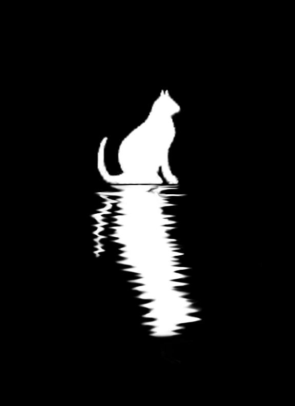 Cat Ripples